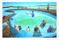 Stone weir Oceanic Culture